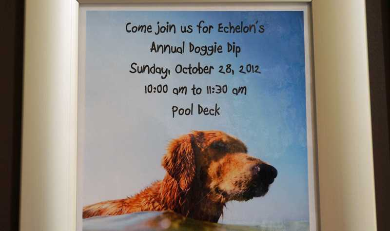 The doggie dip at Echelon at K Station
