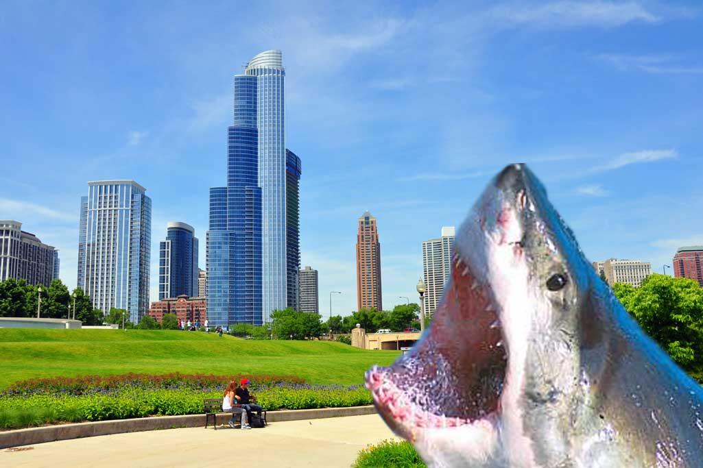 Downtown shark attack! Price cuts in River North, South Loop, and West Loop