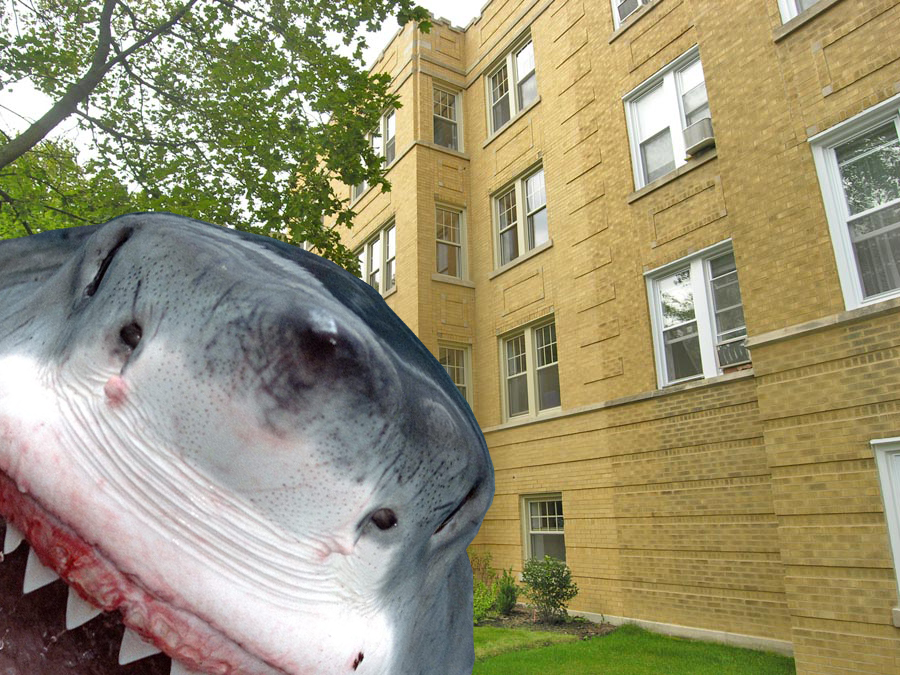 "Shark bites: ""Devastation"" in West Rogers Park's condo conversions"