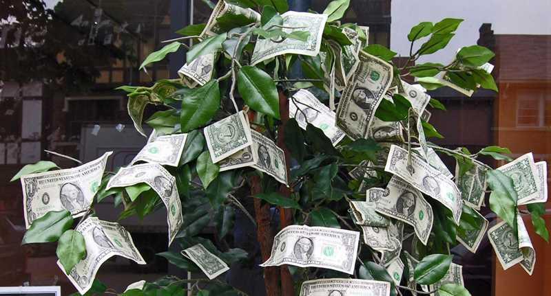 Sidewalk sale money tree, Winnetka, IL