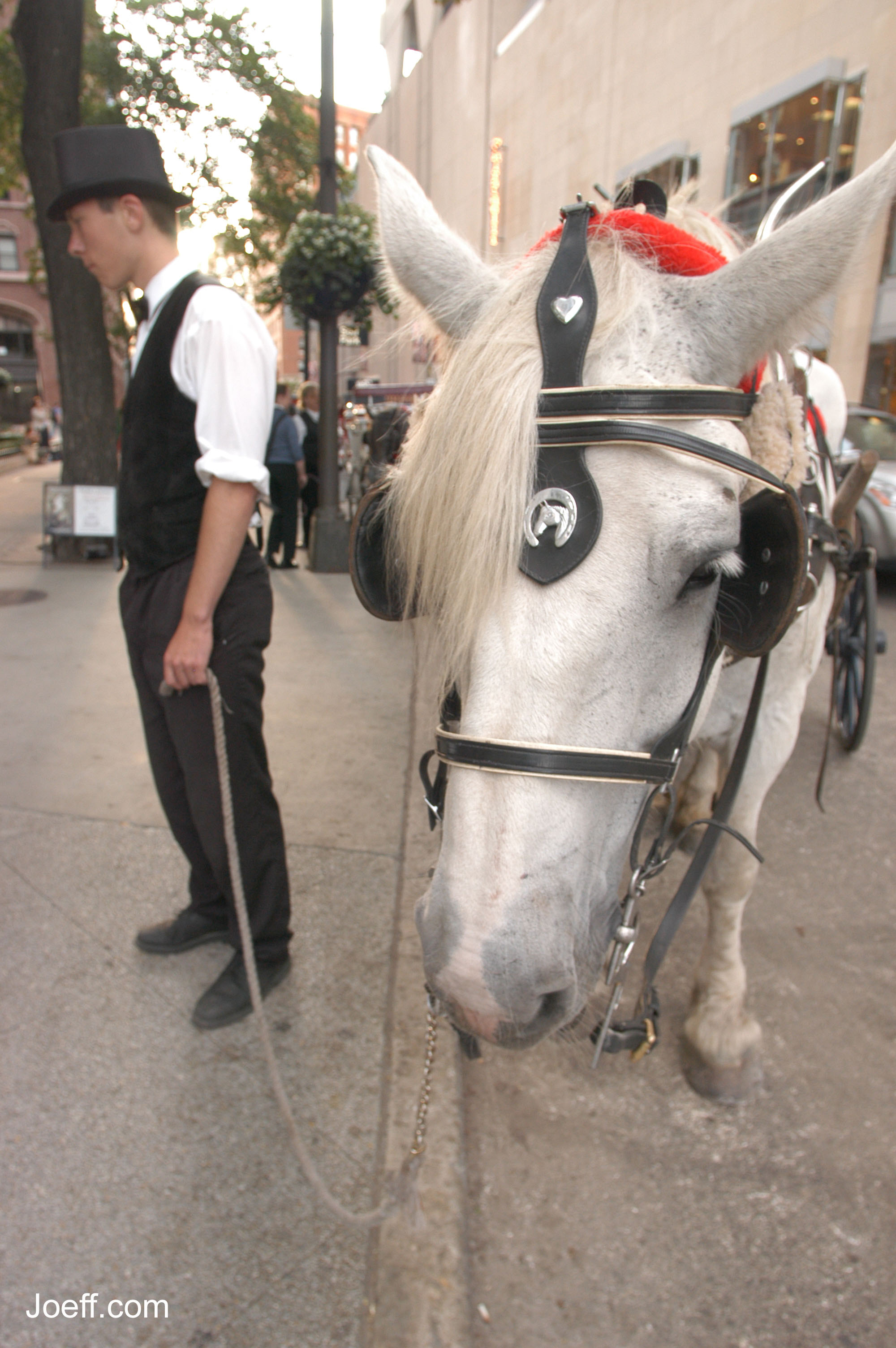 Viagra For Horses