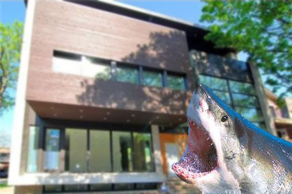 Shark bites: devouring single-family homes in posh 'hoods