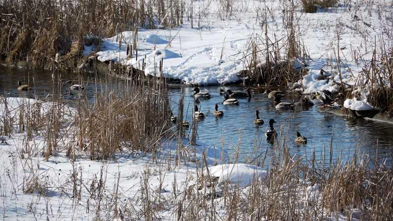 Mill Creek quacks me up