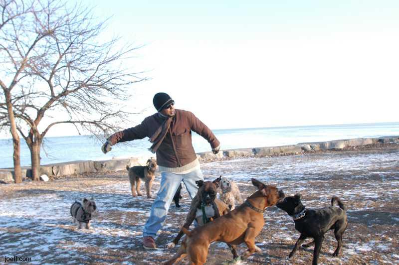 Joeff Davis photo, Dogs at Belmont Harbor, Chicago, IL