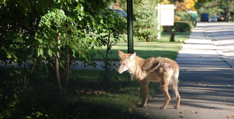 Are there pigs, wolves or kangaroos in your condo?