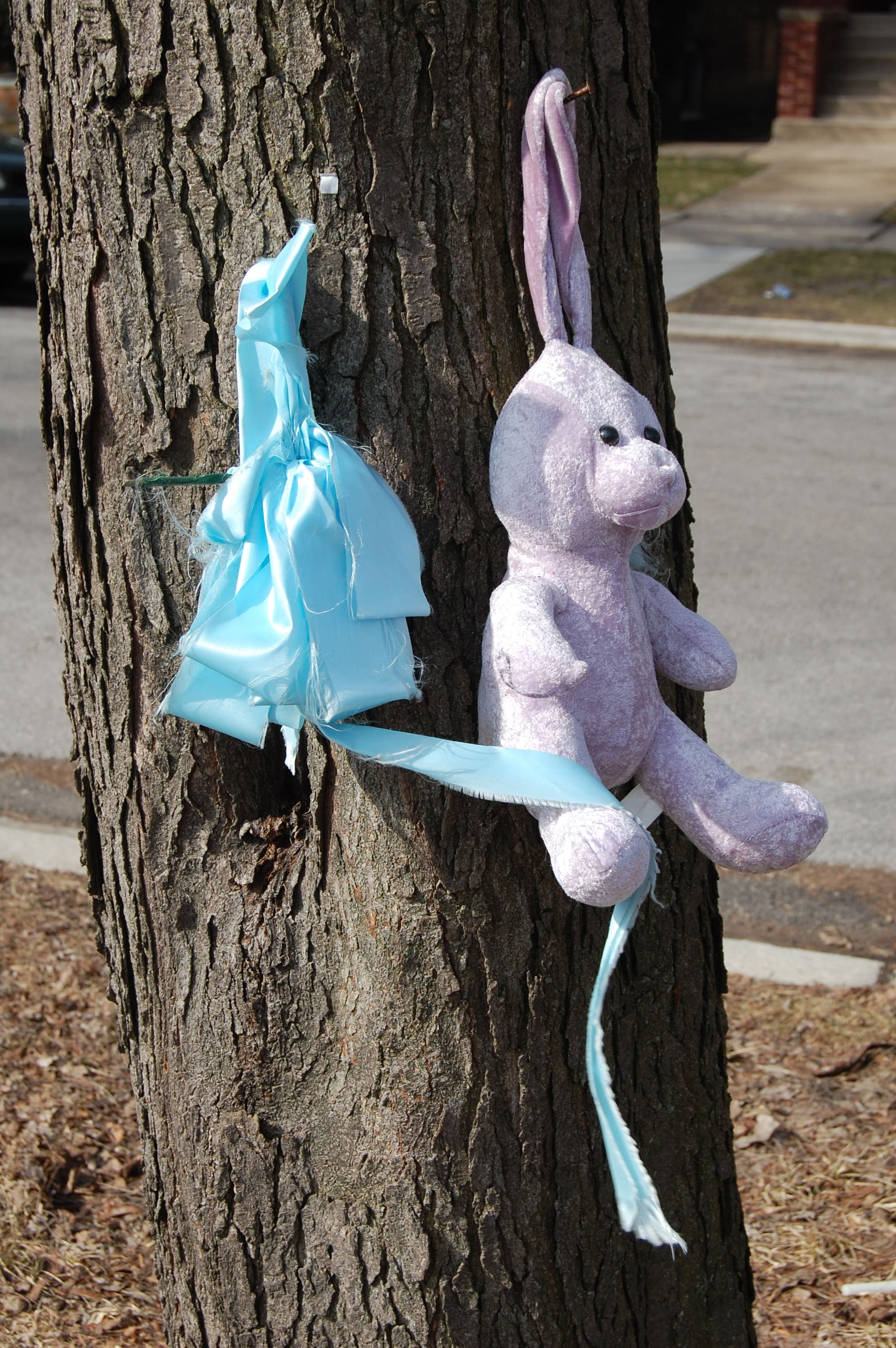Bunny on 9400 block of St Lawrence